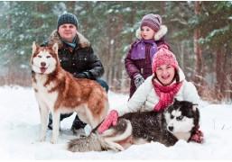 Семейное посещение хаски-парка с катанием в упряжке